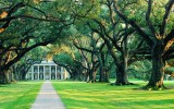 A parade of 300-year-old live oaks leads to the mansion at Oak Alley, Louisiana. Photo courtesy of Oak Alley Foundation.